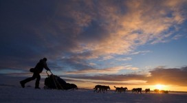 14 Mar 2005, Unalakleet, Alaska, USA --- Champion Robert Sorlie races his dog team toward the Bering Sea coast at sunset during the 2005 Iditarod sled dog race. --- Image by © Paul Souders/Corbis